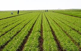 Εκτάσεις βιολογικής γεωργίας