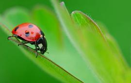 Φυτοπροστασία στη βιολογική γεωργία